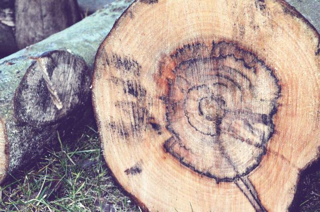 dokładność datowania pierścienia drzewa