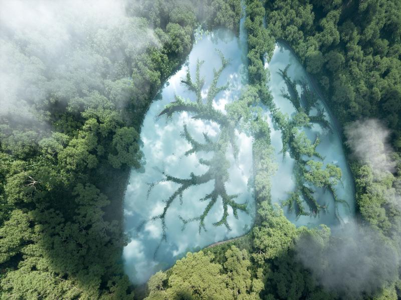 zielone płuca