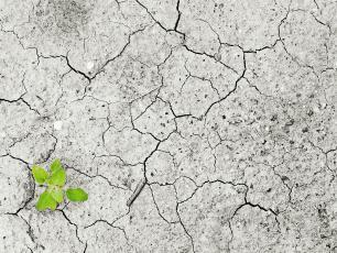 Zanieczyszczenie gleb