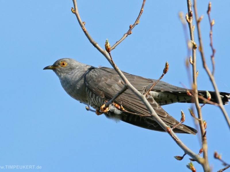 Kampania Spring Alive Obserwacja Wiosennych Przylotów Ptaków