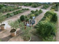 Ogrodowe rośliny w Twoich kosmetykach