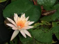 Egzotyczne rośliny w pielęgnacji urody