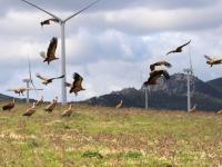 Energetyka wiatrowa - farmy wiatrowe kontra ptaki
