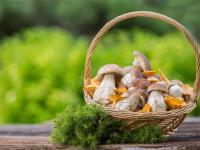 Zbieranie grzybów w Polsce i w Europie - ograniczenia, zakazy i kary