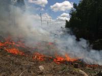 Dlaczego Szwedzi podpalają lasy?