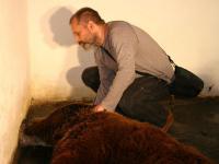 Niedźwiedzie w zoo. Wywiad z Robertem Maślakiem i Agnieszką Sergiel