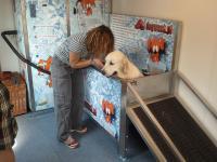 W Krakowie powstała myjnia dla psów
