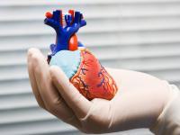 Zdrowy styl życia. Jak Polacy dbają o serce?