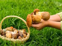 Kiedy najlepiej wybrać się na grzyby i gdzie ich szukać?