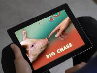 """""""Pig Chase"""" – międzygatunkowa gra na iPada"""