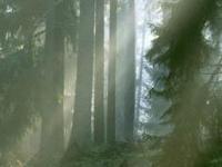 Co mogą lasy pod cieplarnianym kloszem