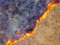 Wypalanie traw - zagrożenia i skutki. Kary za wypalanie traw
