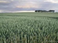 Rolnik kontra Monsanto