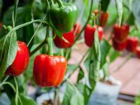 Rozmowne rośliny lepiej rosną