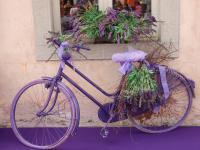 Jeździsz na rowerze, hulajnodze, rolkach?