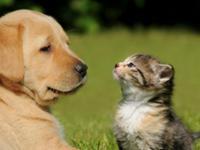 Wakacje z psem i kotem mogą być udane