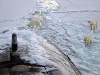 Greenpeace:  to się skończy arktyczną katastrofą