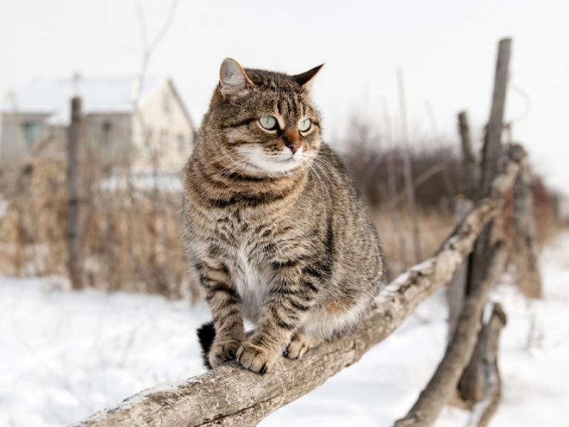 989a572c8b272f Zwierzęta zimą. Jak pomóc zwierzętom przetrwać zimę? | ekologia.pl