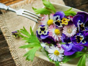 Poznajcie polne kwiaty i rośliny, które bez obawy można zjeść