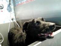 W tej warszawskiej myjni wykąpiesz swojego psa