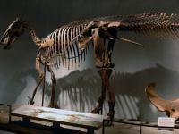 Pinokio rex, czyli tyranozaur z długim nosem