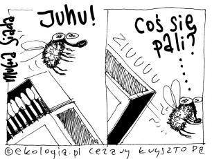 Komentarz satyryczny: mucha się pali
