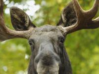Ochrona polskiej przyrody w rękach myśliwych. Wywiad z Arkadiuszem Glaasem