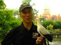 Dlaczego wyginął najliczniejszy ptak świata?