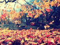 Dlaczego drzewa gubią liście?