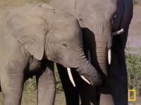 Czy zwierzęta przeżywają żałobę?