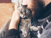 Felinoterapia − doktor kot dobry na wszystko?