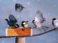 Kiedy zacząć dokarmianie ptaków?