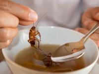 Skąd u karaluchów taka zdolność przetrwania?