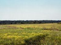 Łąki Nowohuckie - przyrodnicza perełka