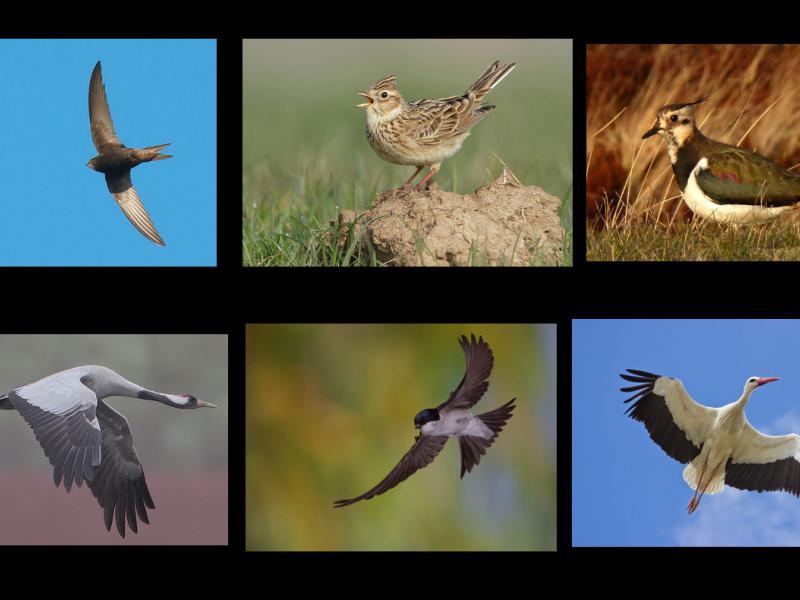 Ptaki Wiosenne Opis I Zdjęcia Wiosenne Ptaki Ciekawostki