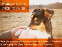 Media społecznościowe – nadzieja dla bezdomnych zwierząt