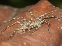 Uwaga! Nisko latające pająki!