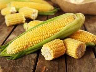 Kukurydza cenna jak złoto