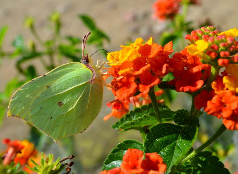 Jak rośliny wabią owady?