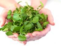 Najzdrowsze warzywo na świecie? Rukiew wodna!