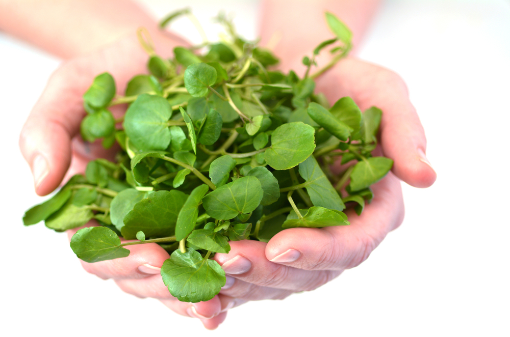Rukiew wodna warzywo - właściwości, witaminy i wartości odżywcze rukwi wodnej