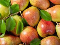 Gruszka owoc - właściwości, witaminy i wartości odżywcze gruszki