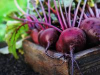 Burak warzywo - właściwości, witaminy i wartości odżywcze buraka