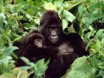 © Timothy Geer / WWF