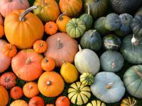 Dynia warzywo - właściwości, witaminy i wartości odżywcze dyni