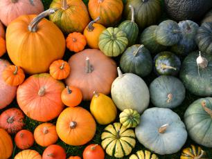 Dynia – boskie warzywo