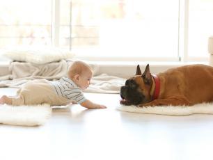 Mieszkanie z psem ratuje przed alergią