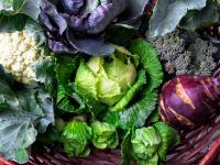 Kapusta nie bez powodu nazywana jest królową warzyw