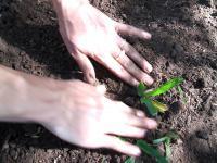 Ogród ekologiczny, czyli jaki?