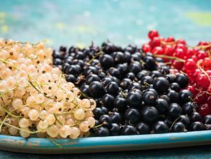 Porzeczka - reguluje poziom cukru we krwi i zbija cholesterol